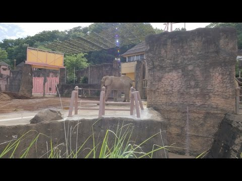 【4K】Videowalk in Tama zoo