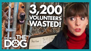 Trouble Dogs and Wasted Resources Grind Dog Shelter to a Halt! | It's Me Or The Dog