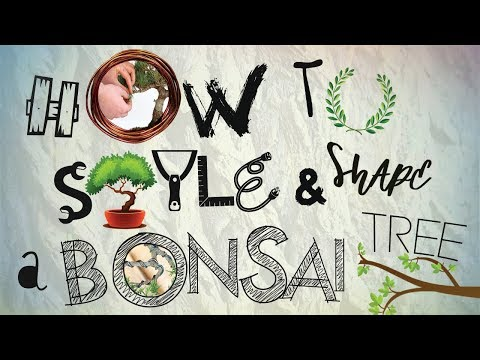 How To Style And Shape A Bonsai Tree