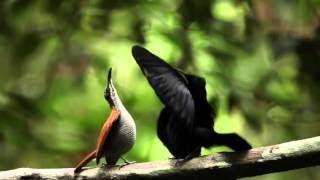 Ворона - самая умная птица. Интересные факты из жизни вороны - Птицы России - Фильм 8