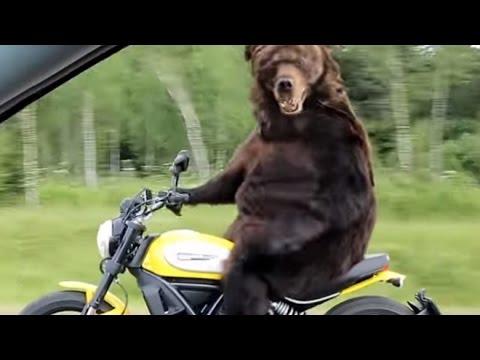 медведь прикол фото