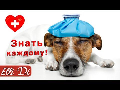 Лептоспироз у собак: симптомы и признаки на фото, лечение