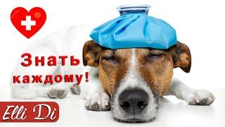 ТОП 5 ОПАСНЫХ БОЛЕЗНЕЙ СОБАК | ИНТЕРЕСНЫЕ ФАКТЫ | Elli Di Собаки