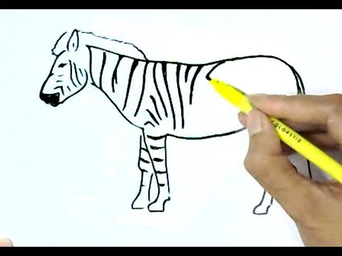 how-to-draw-a-zebra-in-easy-steps,-step-by-step-for-children,-kids,-beginners