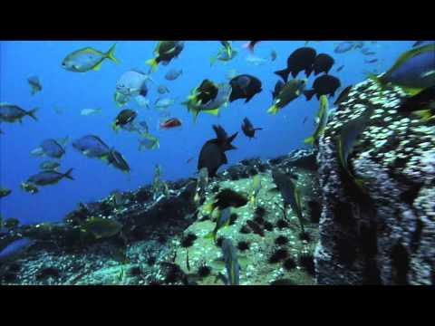 Documental - Isla San Ambrosio
