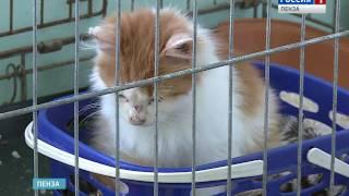 В Пензе решается судьба приюта для бездомных животных «Питомец»