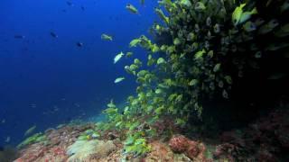 Видео обои - Желтые рыбки(Скачать видео можно на странице: http://all4os.ru/personalization/video_wall/300-video-oboi-zheltye-rybki.html., 2012-02-26T09:36:26.000Z)
