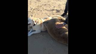 Seal and Dog Become Good Friends