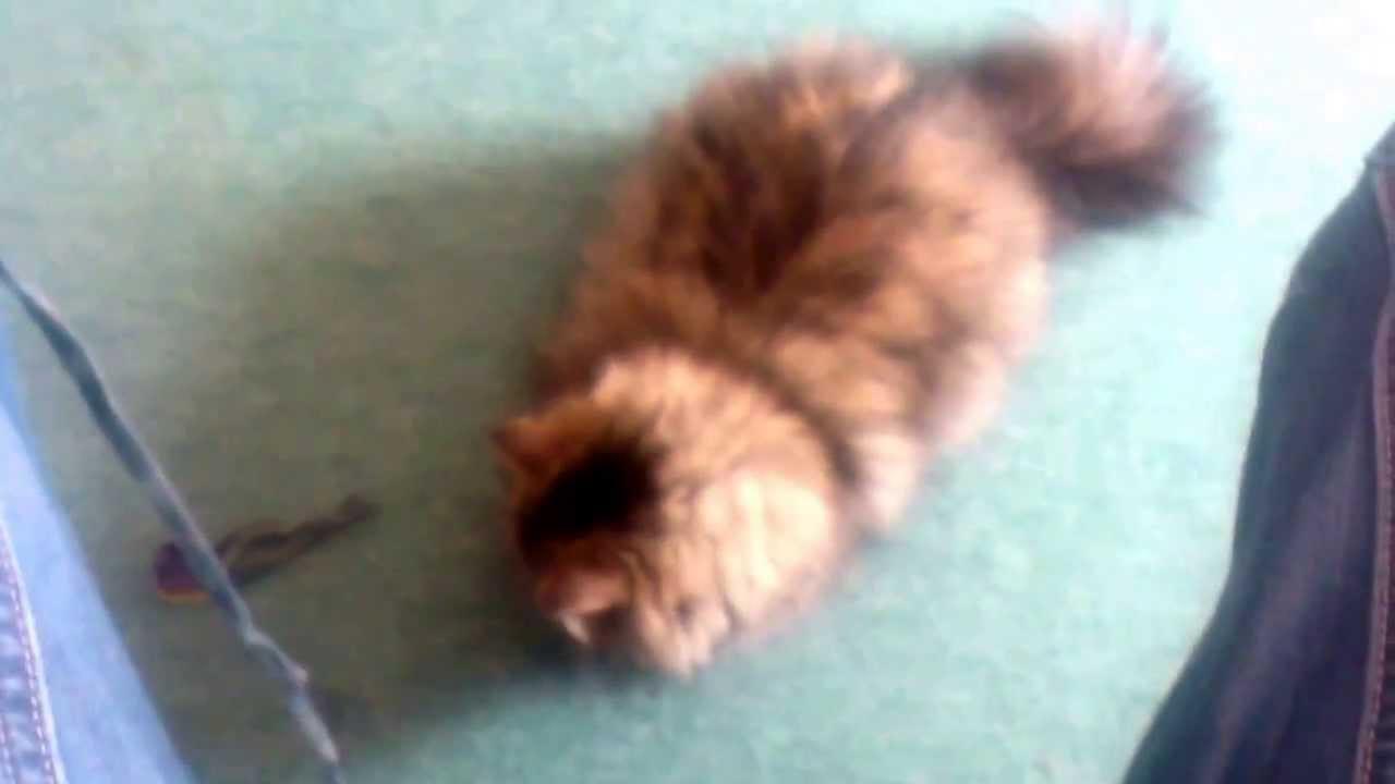 Jouet pour chat facile faire et gratuit youtube - Chat facile et gratuit ...