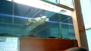 Водная черепаха ;-)