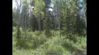 Utah Cabin Land For Sale