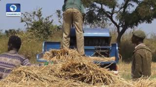 Big Story: Capacity For Rice Production As Alternative Source Of Revenue For Nigeria Pt 3