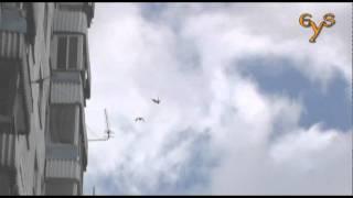 Falcon vs Crow - dogfight / Воздушный бой сокола и вороны
