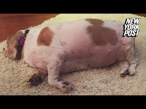 50 pound dog loses half her body weight in amazing transformation