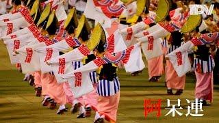 """豪快で華麗 阿呆連の阿波踊り """"Aho-ren"""": Its Dynamism and Beauty"""