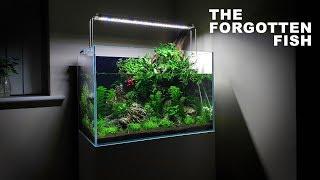 *Betta Fish* Aqua Terrarium Build - 60cm Aquarium / Paludarium Aquascape