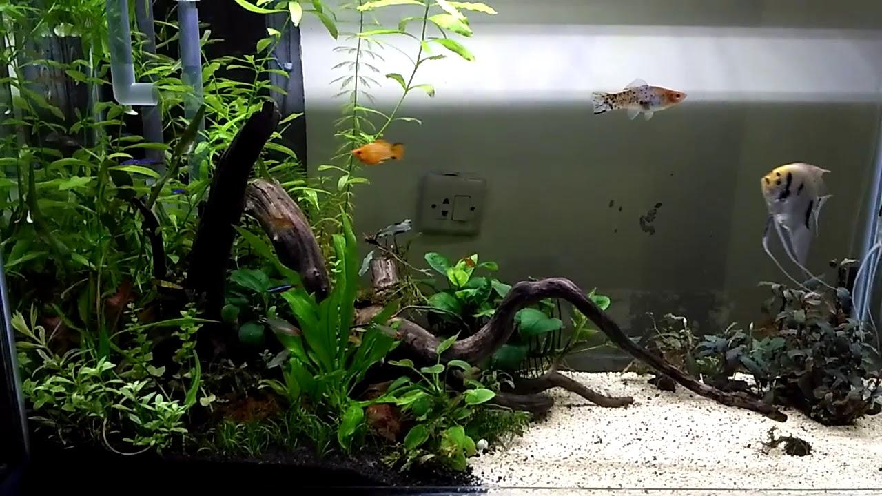Aquascape Aquarium Cantik