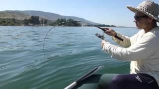 рыбалка на озере кинерет видео