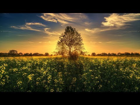 Zedd - The Middle (Braunfufel Remix)