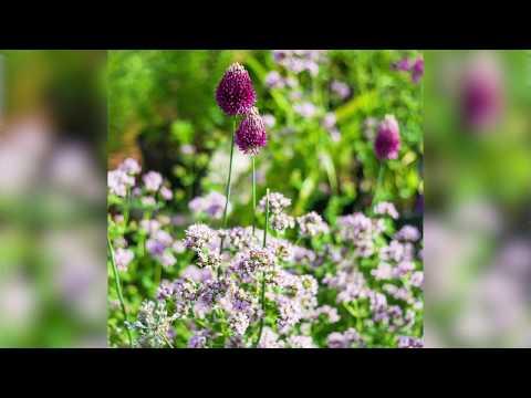 Why Horatio's Garden Are Inviting Everyone Into Their Hospital Garden This April