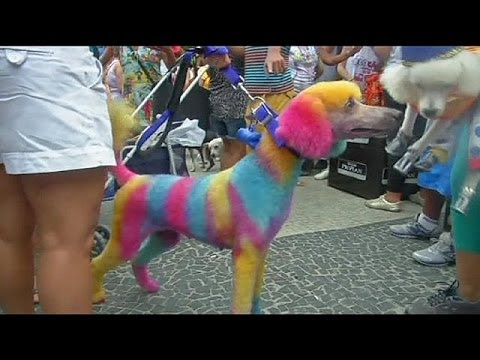 Brazil: dogs and their owners prepare for annual carnival ...