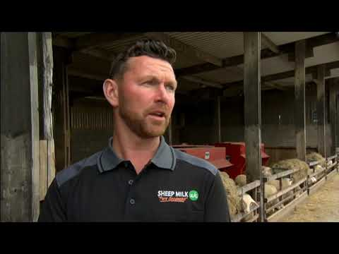 Sheep farming. BBC Contryfile