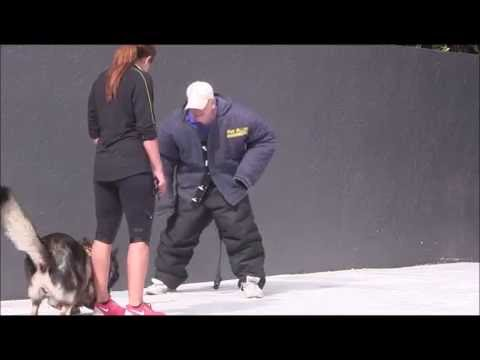 Fully Trained PERSONAL PROTECTION DOGS!    Advanced Training with NO bite suit!