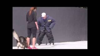 Protection Trained German Shepherd - Attacks Trainer Without Suit On!