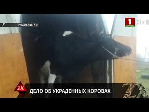 В Рогачевском районе остановили машину с украденными коровами. Зона Х