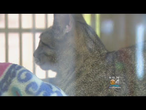 Events Held In Broward County For Pet Adoption