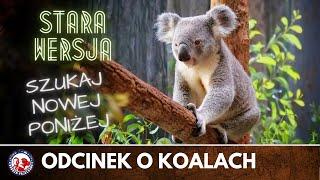AUSTRALIA | Wszystko, co warto wiedzieć o Koalach | Dobrze Pojechane