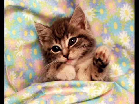 Gatitos lindos youtube for Immagini gatti da colorare
