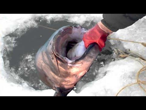 Amazing Ice Fishing