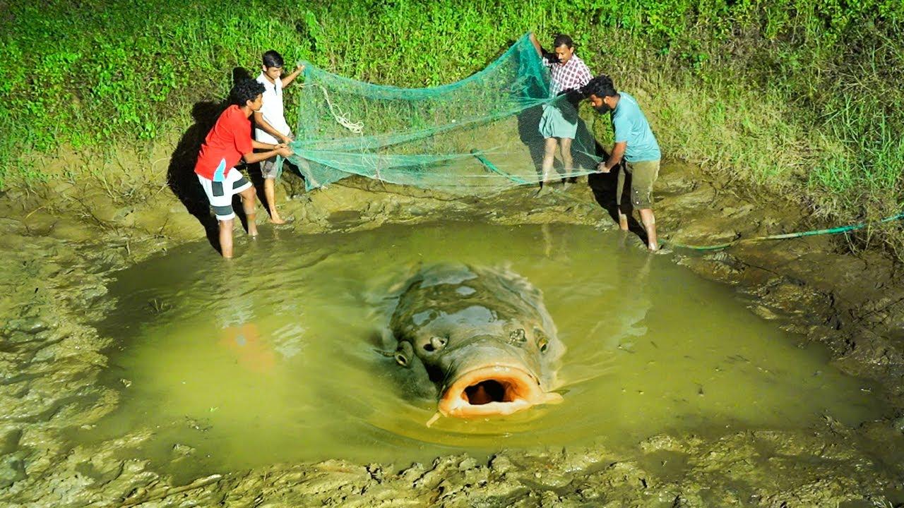 Catching Fish From Old Pond | കുളം വറ്റിച്ചു മീൻ പിടിക്കാം | M4 TECH |