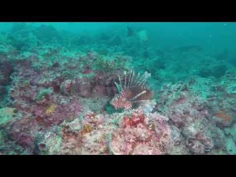 Dived The Pipeline Tampa Bay  With Lionfish