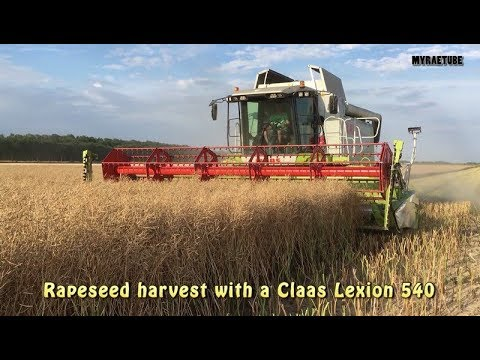 Rapeseed Harvest With A Claas Lexion