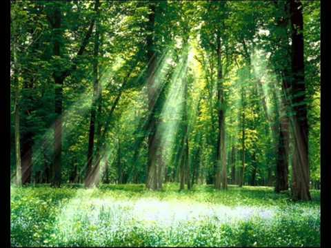Целительная медитация Волшебный лес для отдыха.