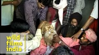 People removing ornaments and tearing clothes from Sadhu