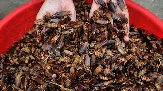 Cockroach Farming Is Booming In China