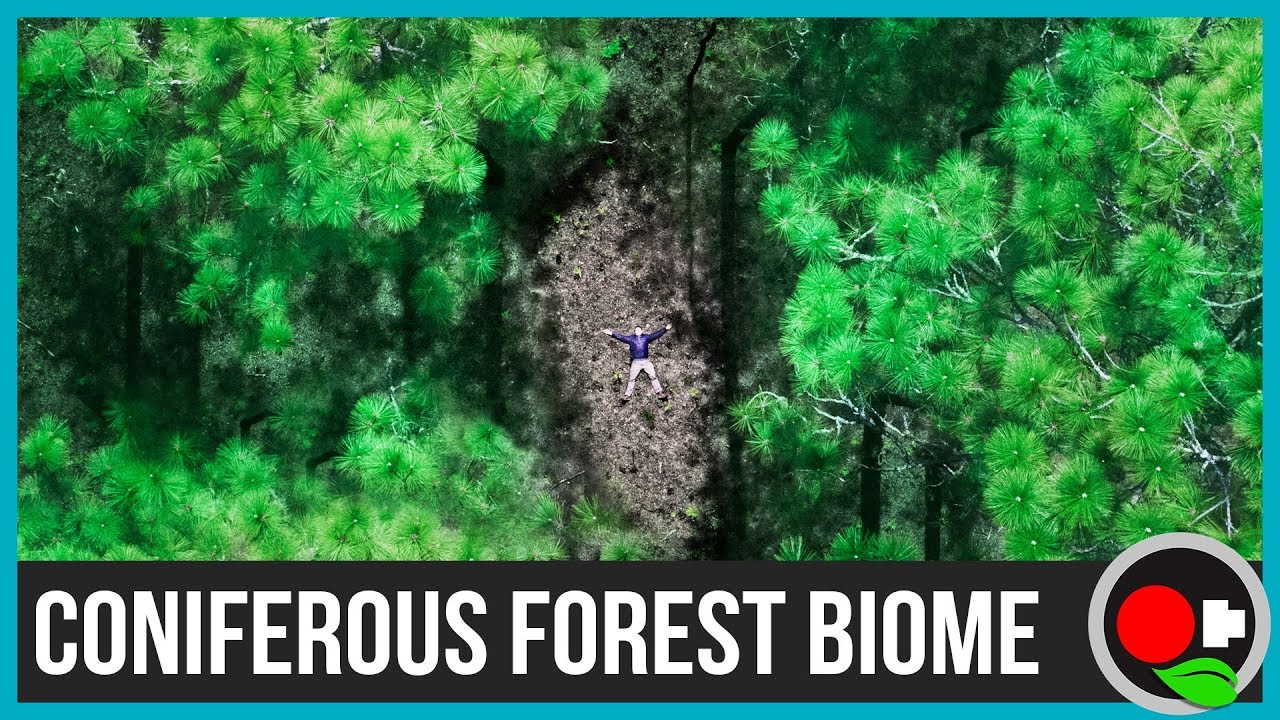 Coniferous Forest Biome - Untamed Science