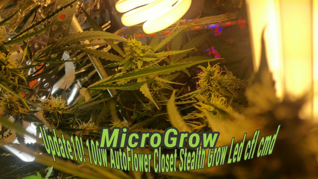 100w Closet Stealth Grow Box Marijuana Diy Led Cfl Cmd Micro Grow Update 10 Youtube