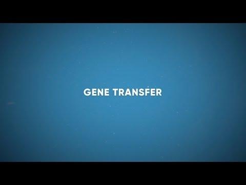 CF Foundation   Gene Transfer