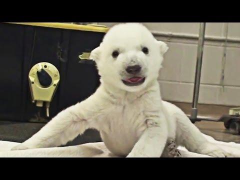 Top 20 cutest animals videos of TomoNews - Compilation