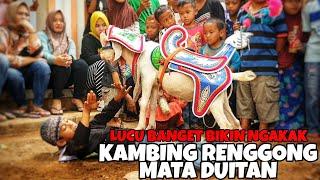Download Atraksi kambing renggong lucu - cep fajar