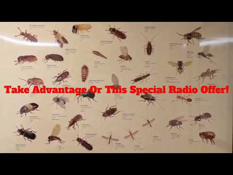 $89 OFF Dewey Pest Control Radio Ad Offer
