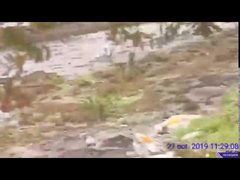 'Caza' a dous furtivos en Poio e localizan dous zulos con ameixa xapónica
