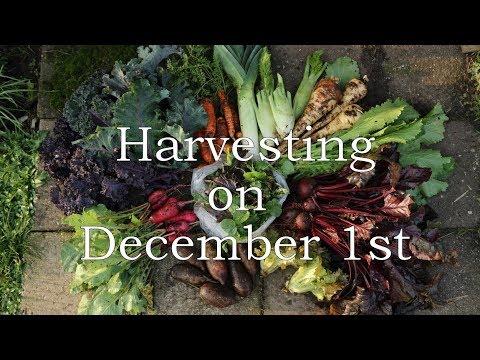 Harvesting on December 1st