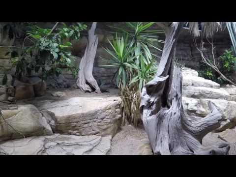 Zoo Aquarium Berlin | Full HD | underwater