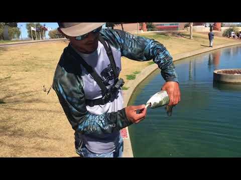 Rio Vista | Arrowhead Lakes Az | Urban Bass/Trout Fishing Az