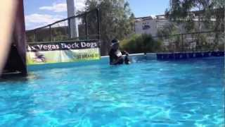 Dock Dogs | Puppy Learns to Jump Off Dock | Sit Means Sit